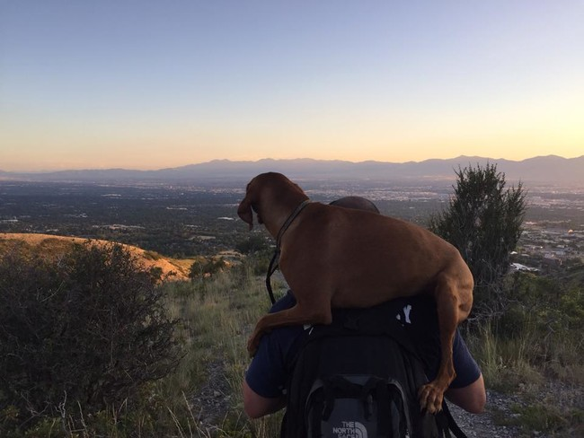 A Firefighter Carried This Injured Dog All The Way Down A Mountain