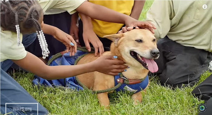 Rescued With a Spinal Injury, See How This Dog Is Making a Difference In Children's Lives