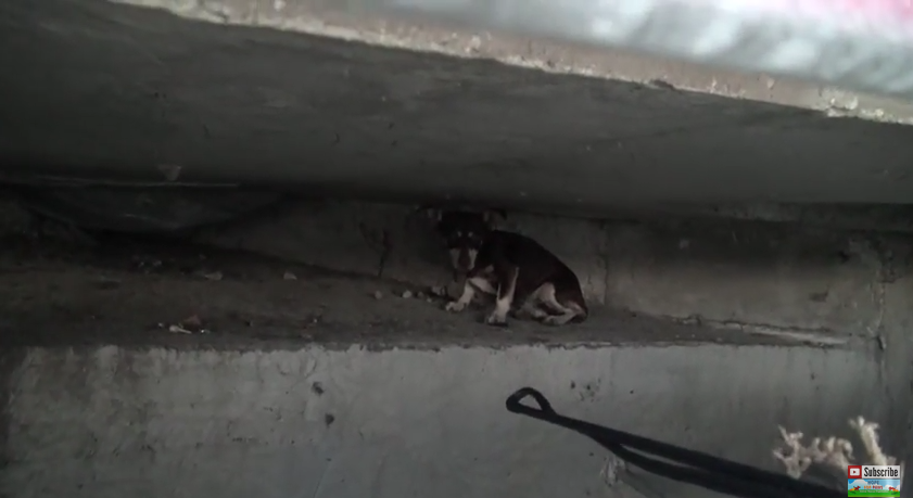 This Dog Was Saved From An Underground Sewer System And Given A New Life