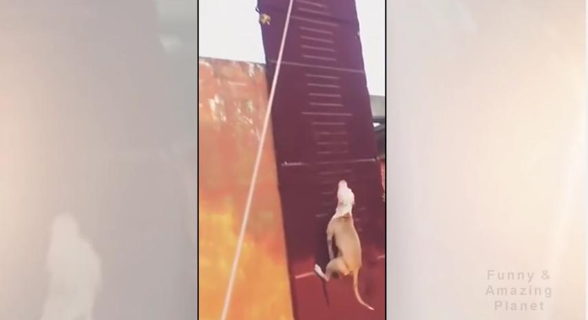 How High Can a Dog Jump?