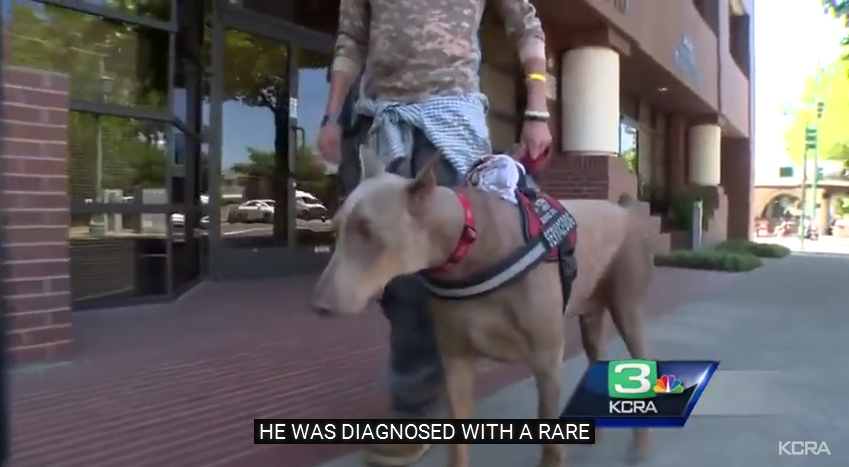 This Dying Veteran's Last Wish Is To Find A Loving Home For His Service Dog