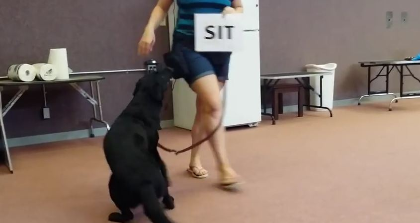 This Smarty-Pants Dog Can Do More Than Just Follow Commands…She Can READ