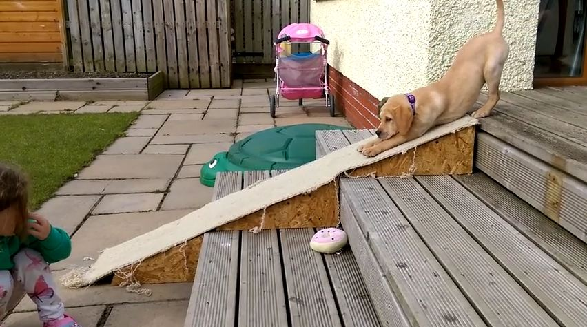 Fact: Every Single Puppy In The World Should Have Their Own Slide