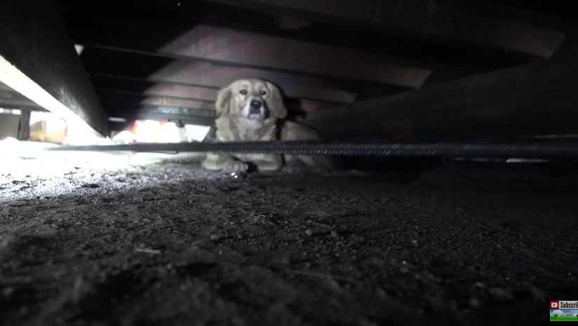 What Happened During This Dog's Rescue Will Keep You On The Edge Of Your Seat