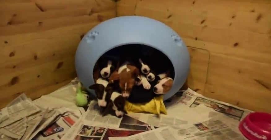 Absolutely Nothing Compares To A Gaggle Of Tiny Pups In A Bed