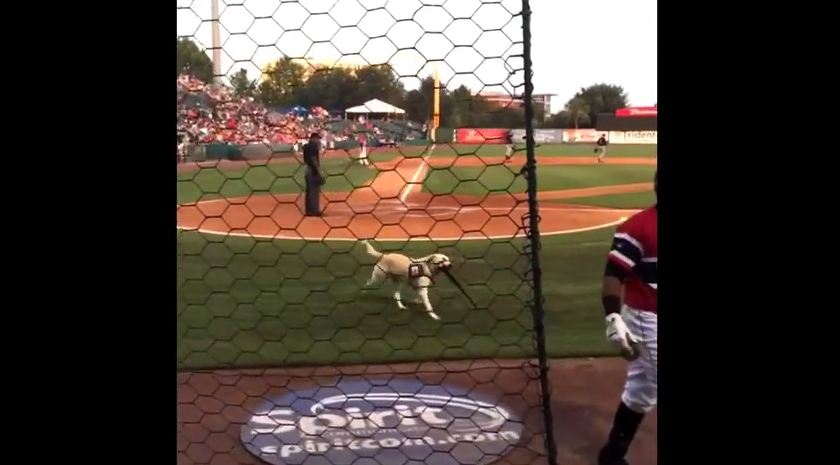 This Adorable Dog Plays The Cutest Game Of Fetch Ever With Local Baseball Team