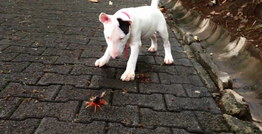 When It's An Adorable Dog Vs. A Teeny-Tiny Crab, Everybody Wins!