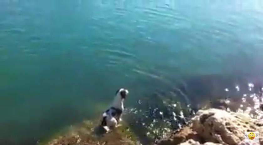 They Saw A Family Of Dolphins Swimming And Then Their Dog Did This