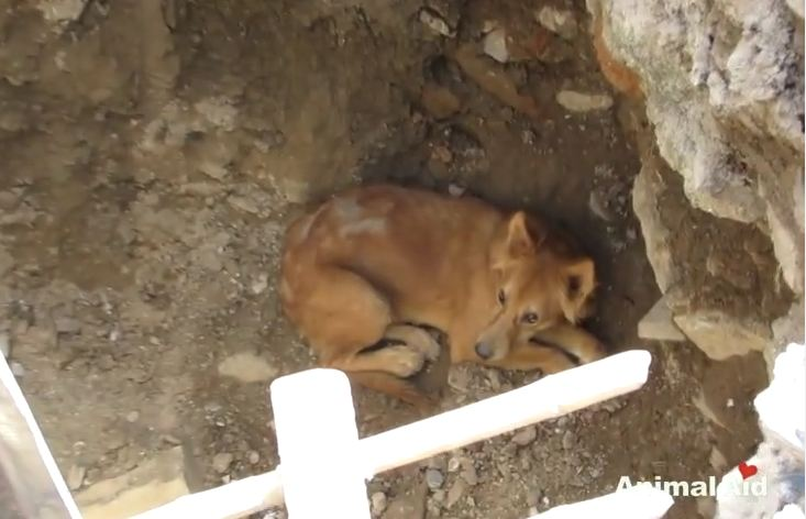 Street Dog Valiantly Rescued From Pit He Fell Into At Construction Site