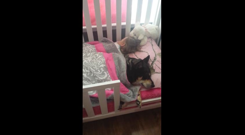 This Mom Found Their Dog Doing The Cutest Thing Ever With His Sister