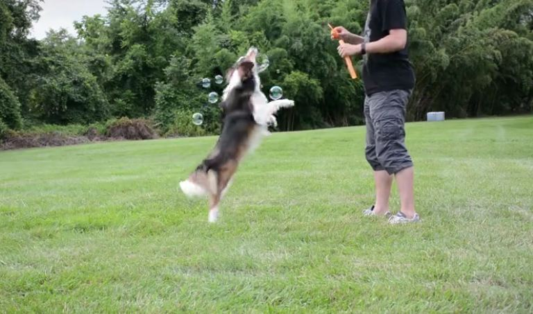 A Dog That Was Once Abandoned And Hit By A Car Now Has The Most Fun Imaginable