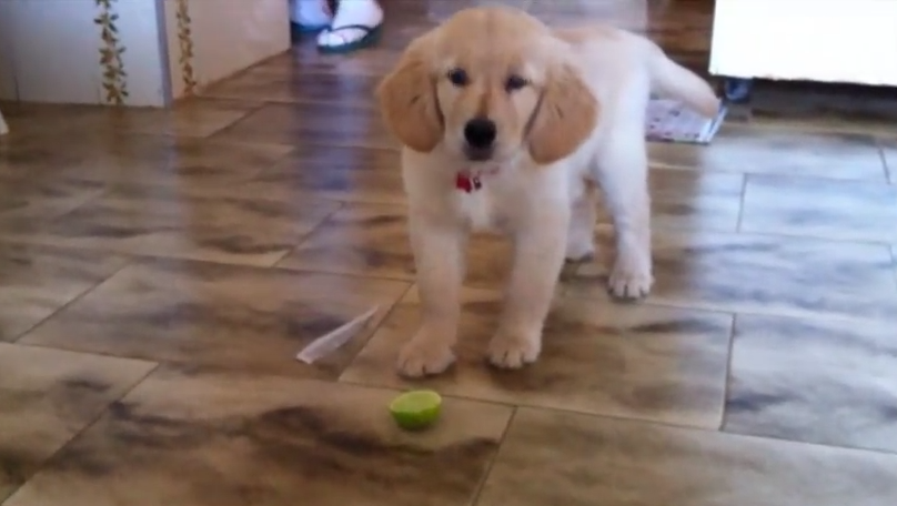 This Little Puppy's Reaction To Eating A Lime Is Adorable