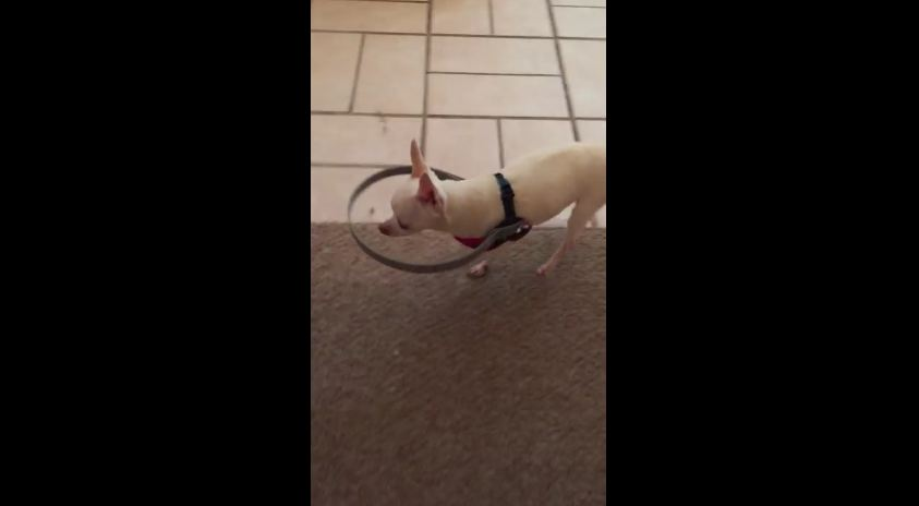 This Guy Completely Changed His Blind Dog's Life With This Invention