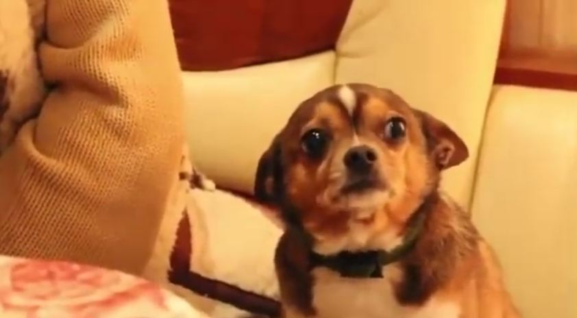 When You See How Confused This Dog Is When He's Scolded, You'll Want To Hug Him