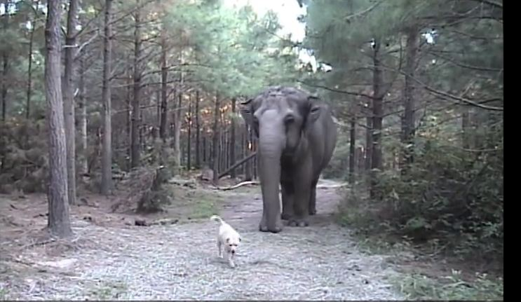 Stray Dog Shows Up At Elephant Sanctuary And Is Adopted…..By An Elephant