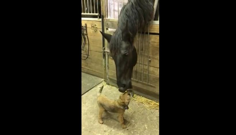 This Horse Shows Love For His Puppy Friend With Adorable Nibbles