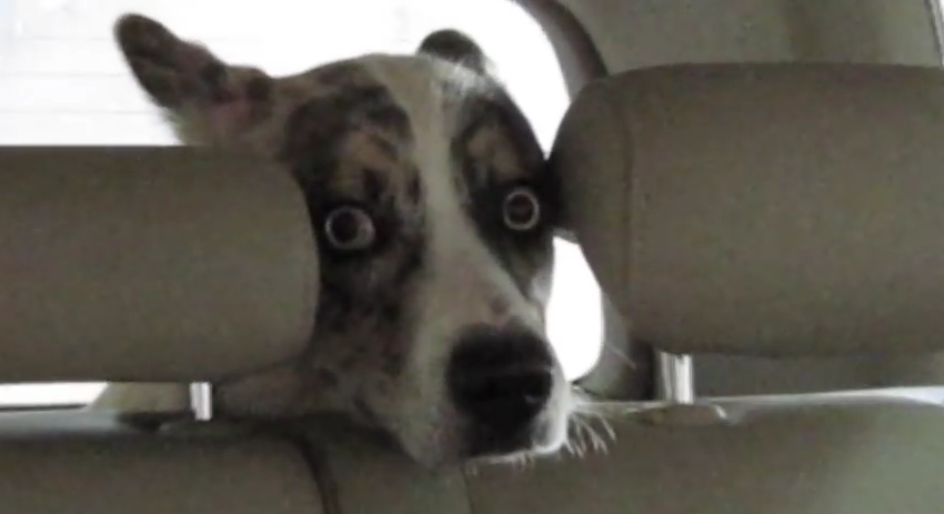 This Dog's Facial Expression Tells You Exactly How He Feels About Car Washes