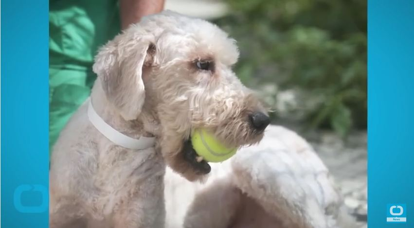 Canine Hospice Gives Dogs A Chance To Enjoy Their Last Days