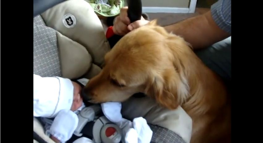 After This Family Dog Meets The New Baby, He Does Something That Melts My Heart