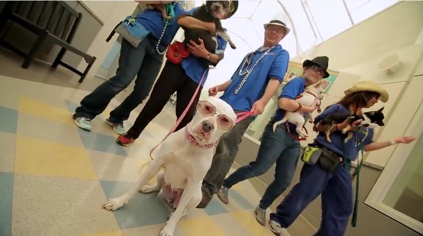 MUST WATCH: Fantastic Shelter Music Video Is Driving Pet Adoptions In Oakland,CA