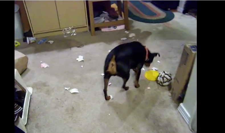 Fireworks + Your Home + Your Lonely Pet = DISASTER
