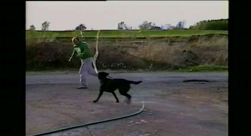 Dog Steals Garden Hose & Drenches Human