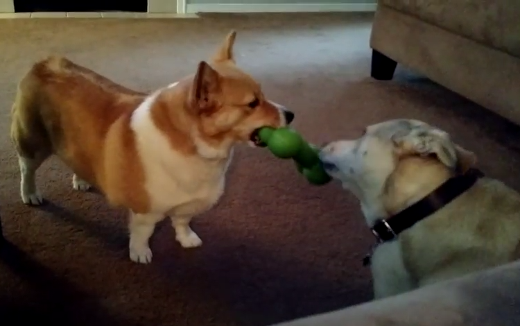 Annoyed Dog Cleverly Tricks Her Sister