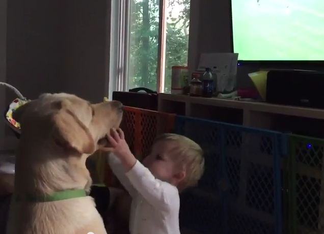 Dog Totally Ignores Baby Bud to Watch Women's World Cup
