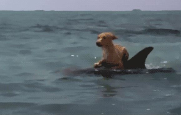 It Looked Like His Pup Was Barking At The Waves, But When He Looked Closer…