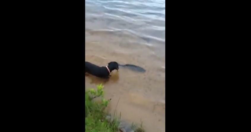 When This Dog Catches Her First Fish She Does The Humane Thing…