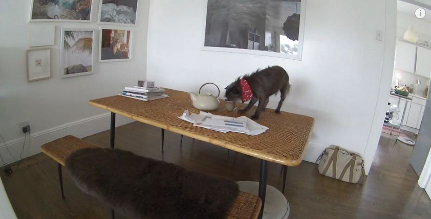 Hidden Camera Catches Dog Misbehaving