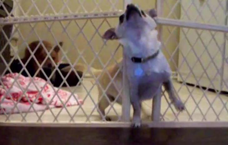 Puppy Jailbreak!