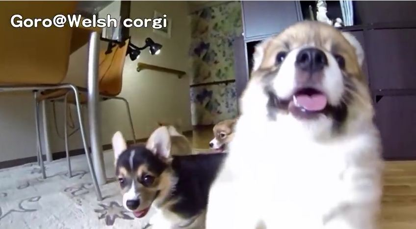 Puppies Decide To Help Mom With The Camera And Hilarity Ensues