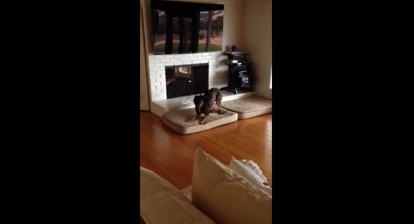 10 Year Old Dog Is Asked About His Birthday And His Reaction Is Priceless.