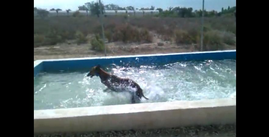 This Greyhound Loves Summer More Than Anyone Else Ever. Just Watch This!