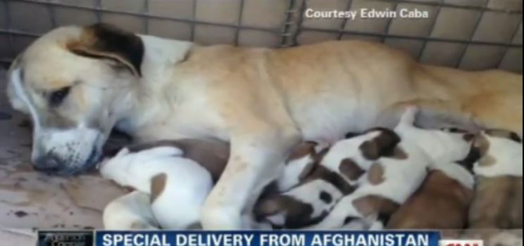Soldiers Find This Stray And Her Puppies. You Have To See What They Do Next.