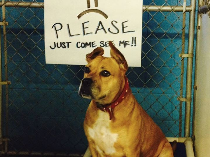 After 719 Days, Dog Continues to Wait for Forever Home