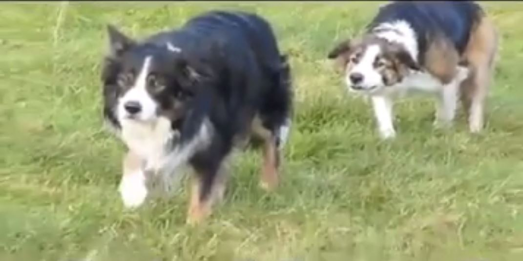 Synchronized sneaking: That was the most suspense I have had today