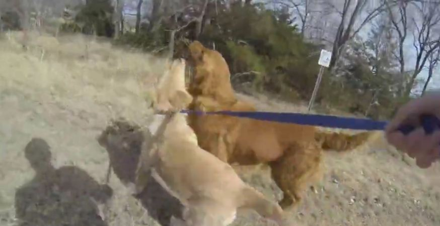 This Dog Hasn't Seen Her Mom Since She Was A Puppy…Watch Their Adorable Reunion