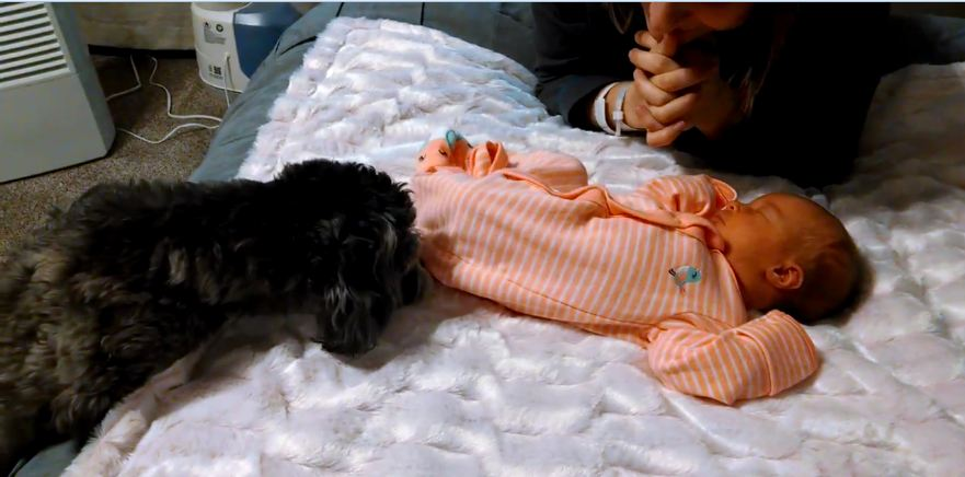 Puppy meets newborn baby for first time