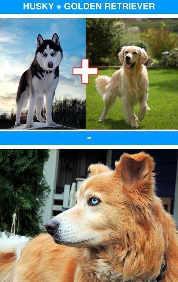 01-funny_cross_breeds