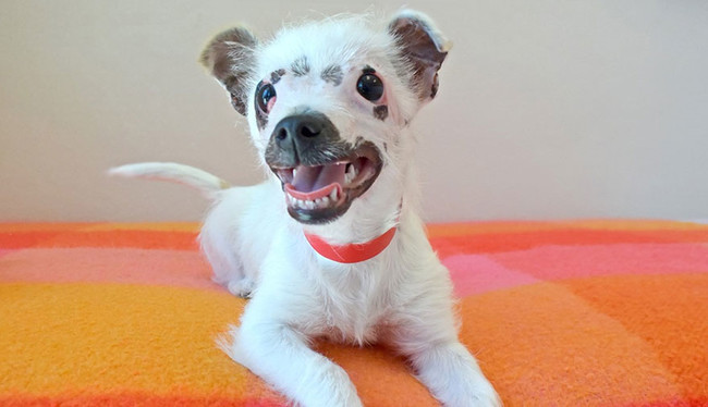This Pup Looks A Little Different, But To One Family, She Is Just Perfect