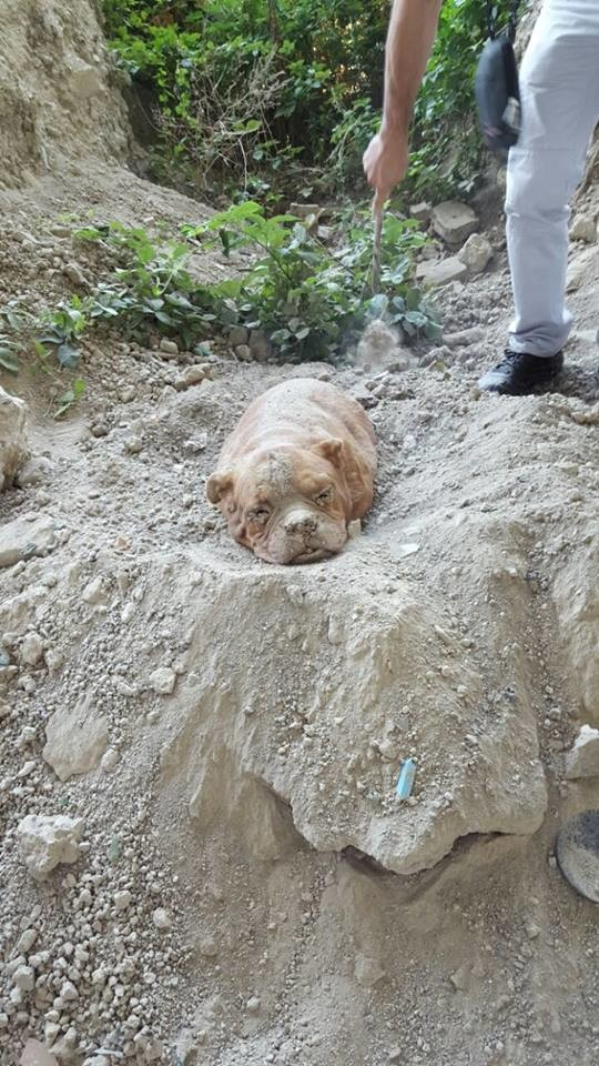 A Man Was Out For A Walk When He Made This Horrific Discovery