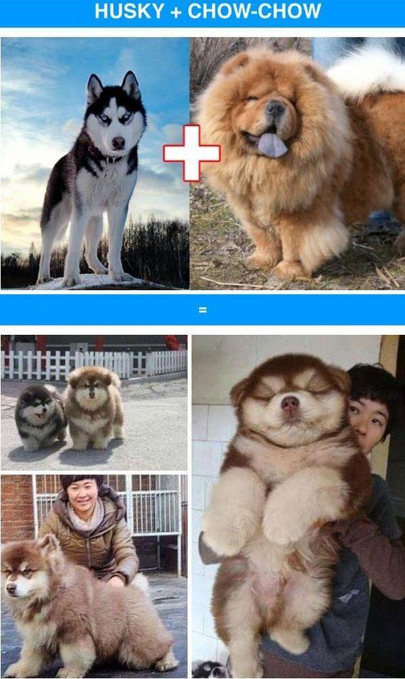 02-funny_cross_breeds