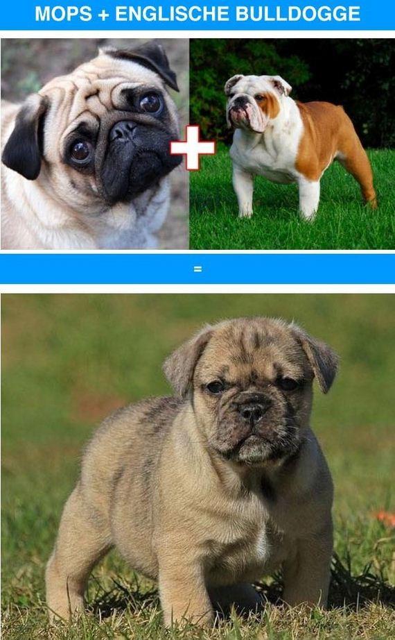 03-funny_cross_breeds
