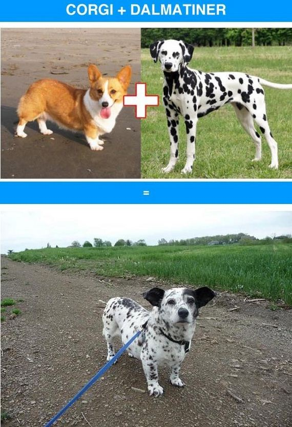 05-funny_cross_breeds