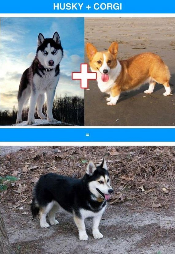 09-funny_cross_breeds