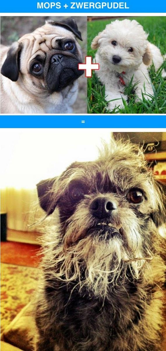 10-funny_cross_breeds