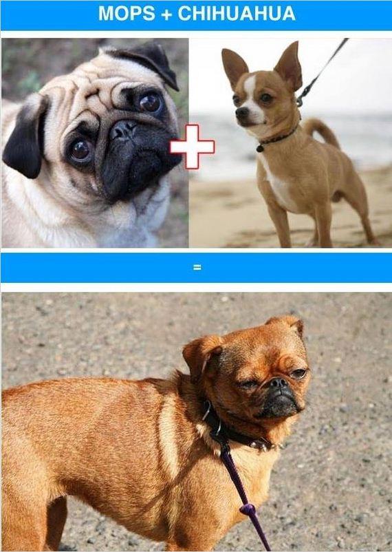 11-funny_cross_breeds