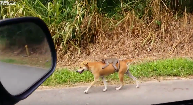 This Monkey Found His Mother Dead, The Dog Did Something Unthinkable To Him
